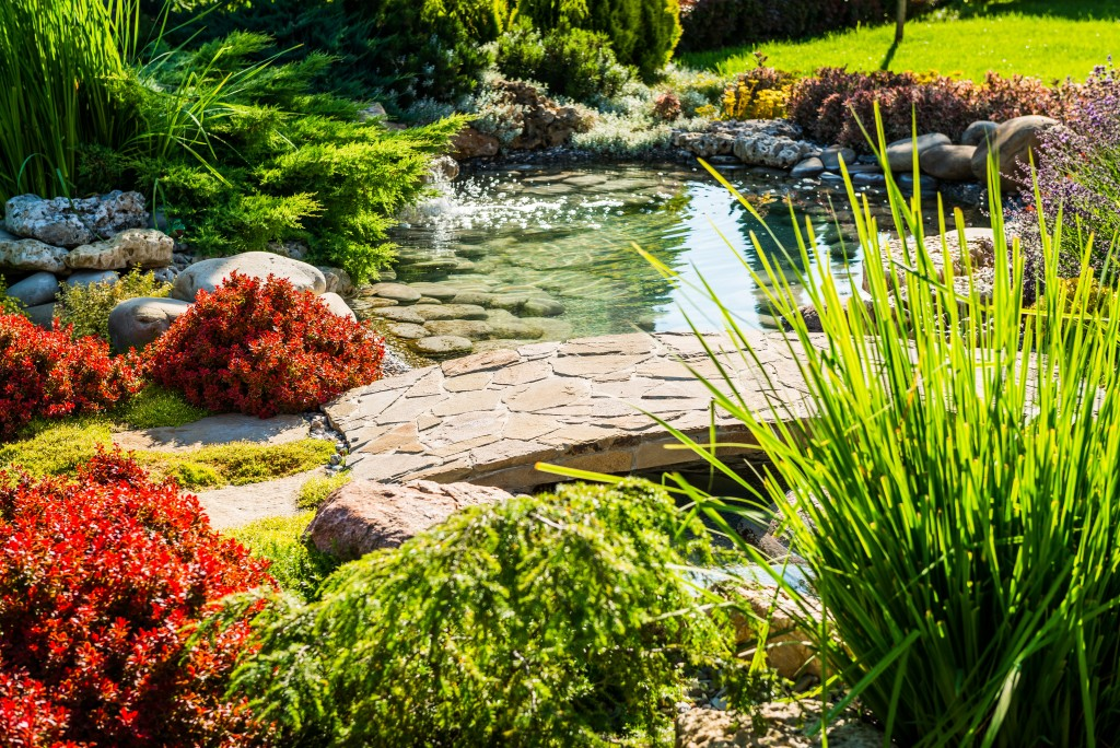 Naturescape backyard with pond