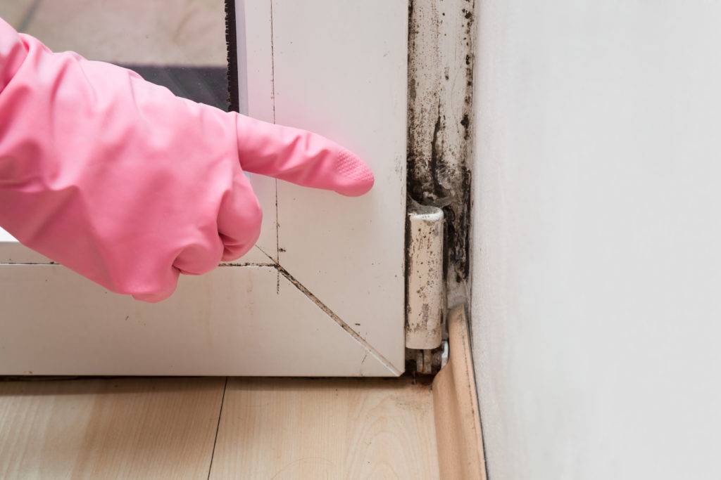 Person pointing at the mold