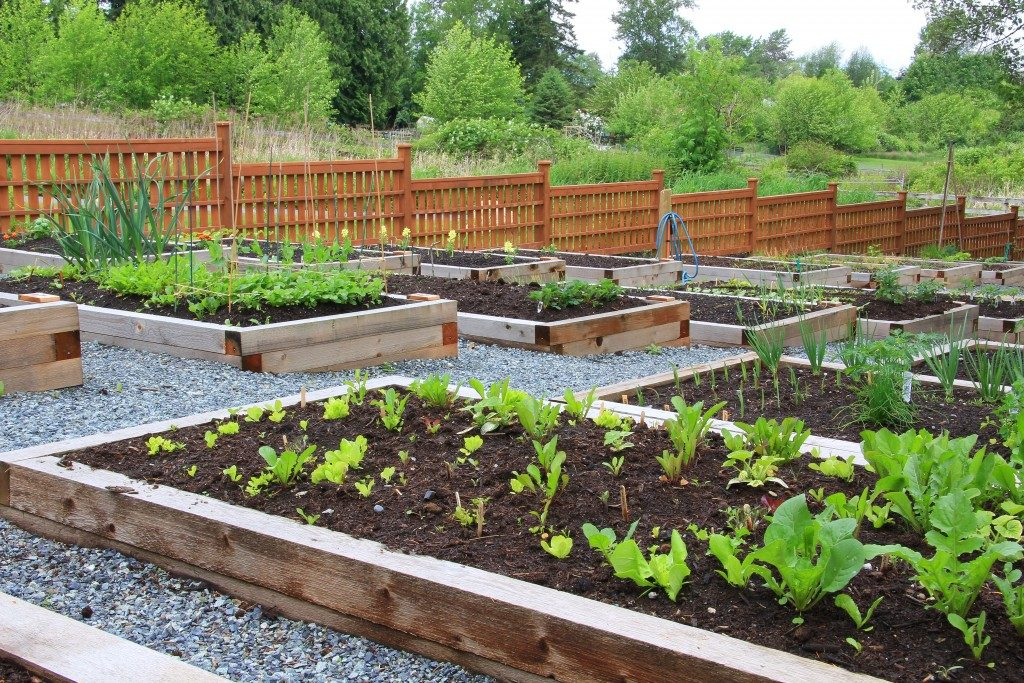 Community vegetable garden boxes