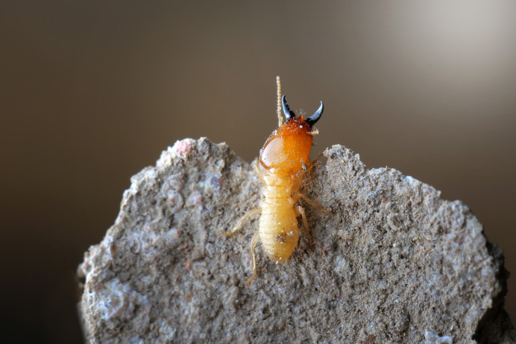 termite on the cement